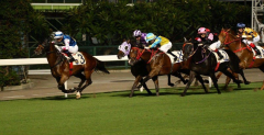 One day horse racing tour in HK
