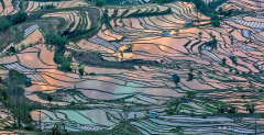 2 Day Wonderland Tour to Yuanyang Rice Terrace from Kunming